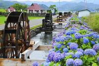 安並の水車群とアジサイ 11076025826| 写真素材・ストックフォト・画像・イラスト素材|アマナイメージズ