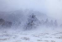 地吹雪の剣山 11076025927| 写真素材・ストックフォト・画像・イラスト素材|アマナイメージズ