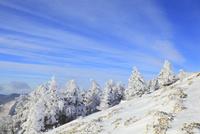 剣山の樹氷 11076025942| 写真素材・ストックフォト・画像・イラスト素材|アマナイメージズ