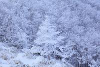 剣山の樹氷