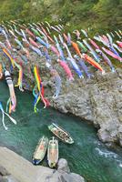大歩危峡のコイノボリと遊覧船