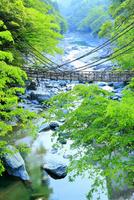 新緑と祖谷のかずら橋・祖谷川