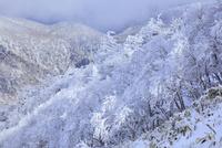 剣山の樹氷 11076026069| 写真素材・ストックフォト・画像・イラスト素材|アマナイメージズ