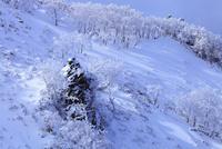 剣山の樹氷 11076026071| 写真素材・ストックフォト・画像・イラスト素材|アマナイメージズ