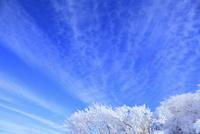 剣山の樹氷と雲 11076026074| 写真素材・ストックフォト・画像・イラスト素材|アマナイメージズ