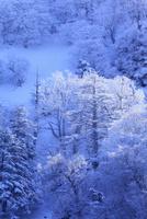 剣山の樹氷 11076026094| 写真素材・ストックフォト・画像・イラスト素材|アマナイメージズ