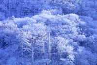剣山の樹氷 11076026095| 写真素材・ストックフォト・画像・イラスト素材|アマナイメージズ