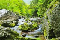 小田深山渓谷の新緑と清流
