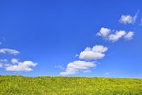 雲と青空にナノハナ咲く土手