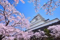 鶴ヶ城(会津若松城) 天守閣と桜