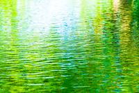 新緑が映る水面