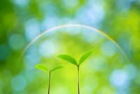 新緑のぼけと二葉に虹