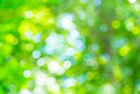新緑のぼけ