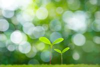新緑の葉にぼけと二葉 11076026476| 写真素材・ストックフォト・画像・イラスト素材|アマナイメージズ