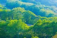 斑尾高原の新緑
