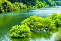 宇治川と新緑