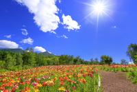 花の里 ユリと道に八ヶ岳