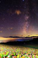 花の里 百日草のライトアップに南アルプスと天の川