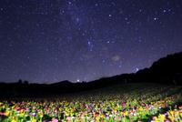 花の里 百日草のライトアップに八ヶ岳と天の川 11076026902| 写真素材・ストックフォト・画像・イラスト素材|アマナイメージズ