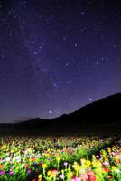 花の里 百日草のライトアップに八ヶ岳と天の川
