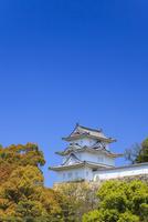 青空に新緑と明石城