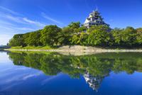 岡山城 11076026968| 写真素材・ストックフォト・画像・イラスト素材|アマナイメージズ
