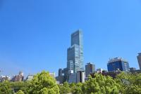 天王寺公園の新緑とあべのハルカス