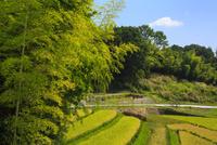 竹林と田圃