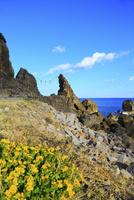 室戸鹿岡鼻海岸と夫婦岩