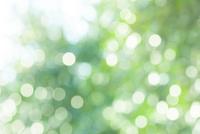 新緑の草に付いた水滴