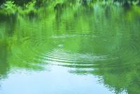 緑の映る水面と波紋 11076027475  写真素材・ストックフォト・画像・イラスト素材 アマナイメージズ