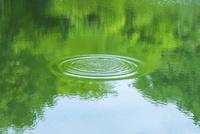 緑の映る水面と波紋 11076027491  写真素材・ストックフォト・画像・イラスト素材 アマナイメージズ