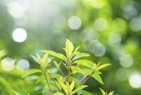 緑の葉アップとぼけ