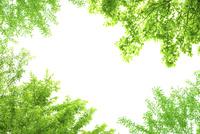 緑の葉アップ