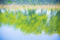 新緑の映る水面