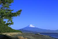 三保の松原から富士山を望む 11076027918| 写真素材・ストックフォト・画像・イラスト素材|アマナイメージズ