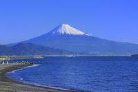 三保の松原から富士山を望む 11076027920| 写真素材・ストックフォト・画像・イラスト素材|アマナイメージズ