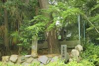 大坂夏の陣 安居神社(安居天満宮)