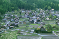 白川郷 新緑の合掌集落と田んぼ