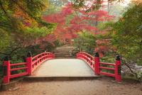 宮島 紅葉谷公園の紅葉 11076028181| 写真素材・ストックフォト・画像・イラスト素材|アマナイメージズ