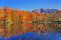 紅葉の刈込池と白山三ノ峰