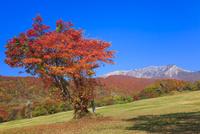 紅葉の奥大山スキー場から望む大山 11076028238| 写真素材・ストックフォト・画像・イラスト素材|アマナイメージズ