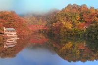 帝釈峡 朝霧かかる紅葉の神龍湖 11076028249| 写真素材・ストックフォト・画像・イラスト素材|アマナイメージズ