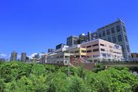 お台場海浜公園の新緑とビル