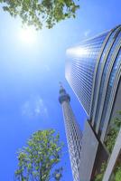 スカイツリーと新緑に太陽 11076028285| 写真素材・ストックフォト・画像・イラスト素材|アマナイメージズ