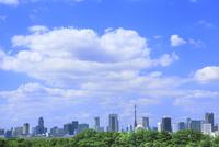 東京タワーとビル群