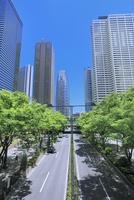 新宿副都心のビル街と新緑