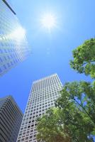新宿副都心のビル群と新緑に太陽 11076028470| 写真素材・ストックフォト・画像・イラスト素材|アマナイメージズ