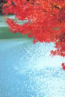 紅葉のモミジと光芒