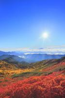 乗鞍エコーライン ナナカマドの紅葉と雲海に光芒